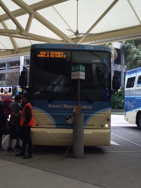 Holly bus
