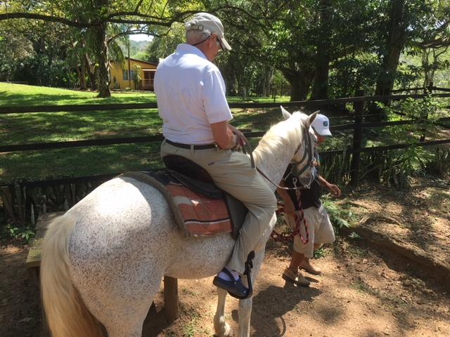Horse - Mount 2