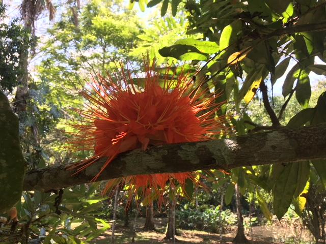 Gardens - Favorite Flower