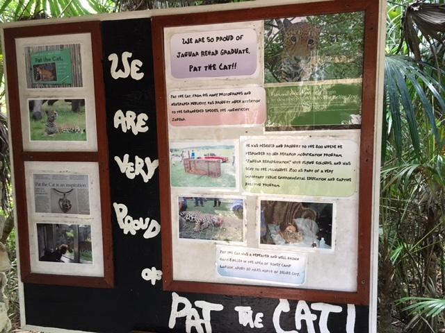 Zoo - Pat the Cat