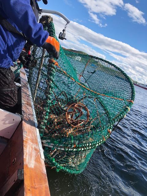 Crabs Caught